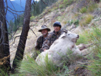 Goat Hunt Success Idaho