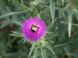 Idaho Hunt area wildflower