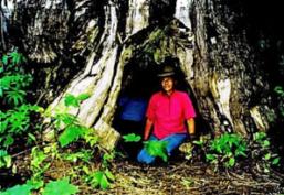 The Original Ridgerunner cedar tree